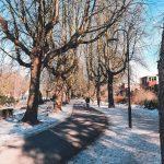 Bomen in Noorderplantsoen met sneeuw
